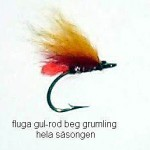 flugagul-rodbeggrumlinghela sasongen
